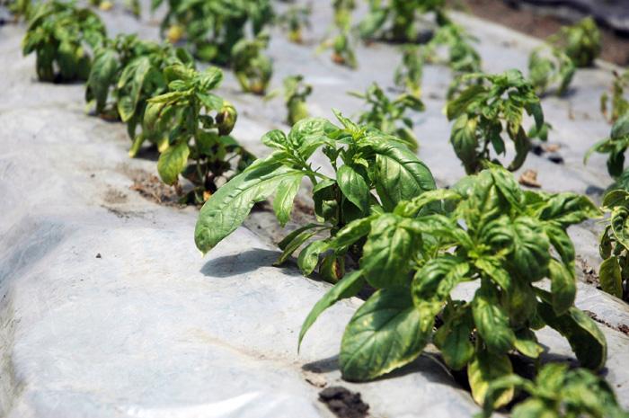 La ciencia de cultivar hierbas arom ticas unimedios - Plantar plantas aromaticas ...