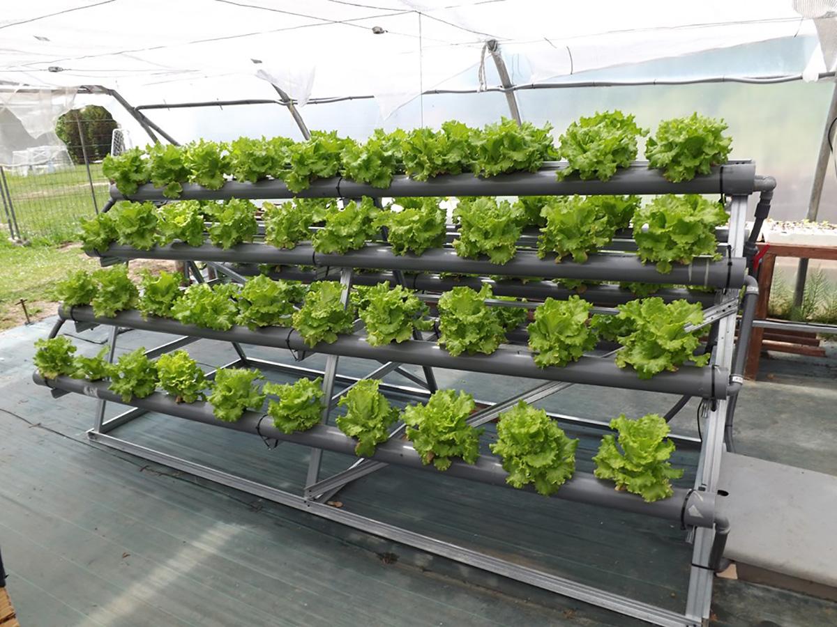 Sistema Cerrado Para Cultivos Hace M 225 S Eficiente El Uso