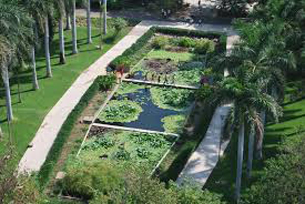 Jardines bot nicos esenciales en la regeneraci n de for Caracteristicas de un jardin botanico