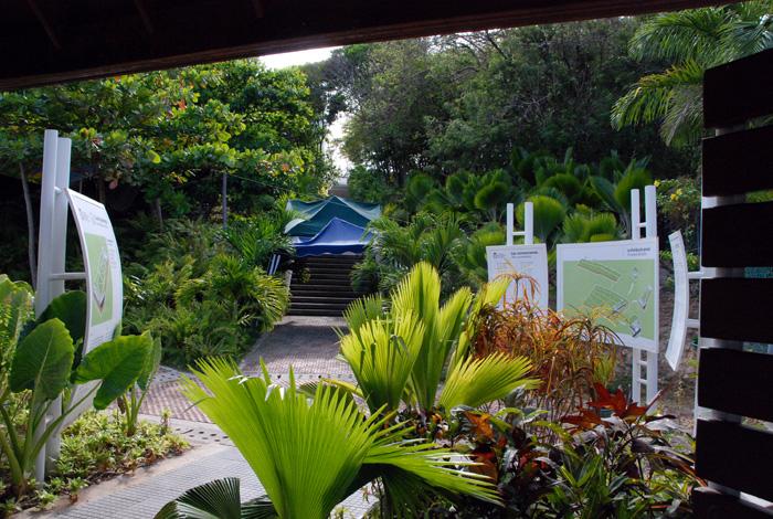 Jard n bot nico de san andr s en la vitrina tur stica de for Arboles nativos de colombia jardin botanico