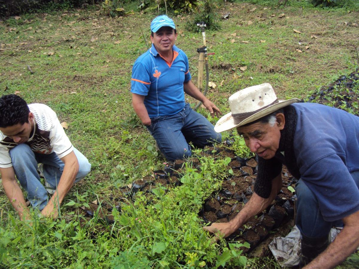 Comit regional fortalecer agricultura familiar campesina for Recurso clausula suelo
