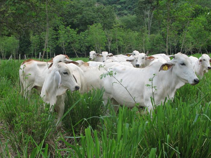 Agencia de noticias t cnicas de manejo agropecuario que for 4 usos del suelo en colombia