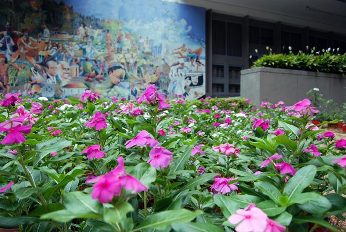plantas medicinales de la tradici n popular a la ciencia