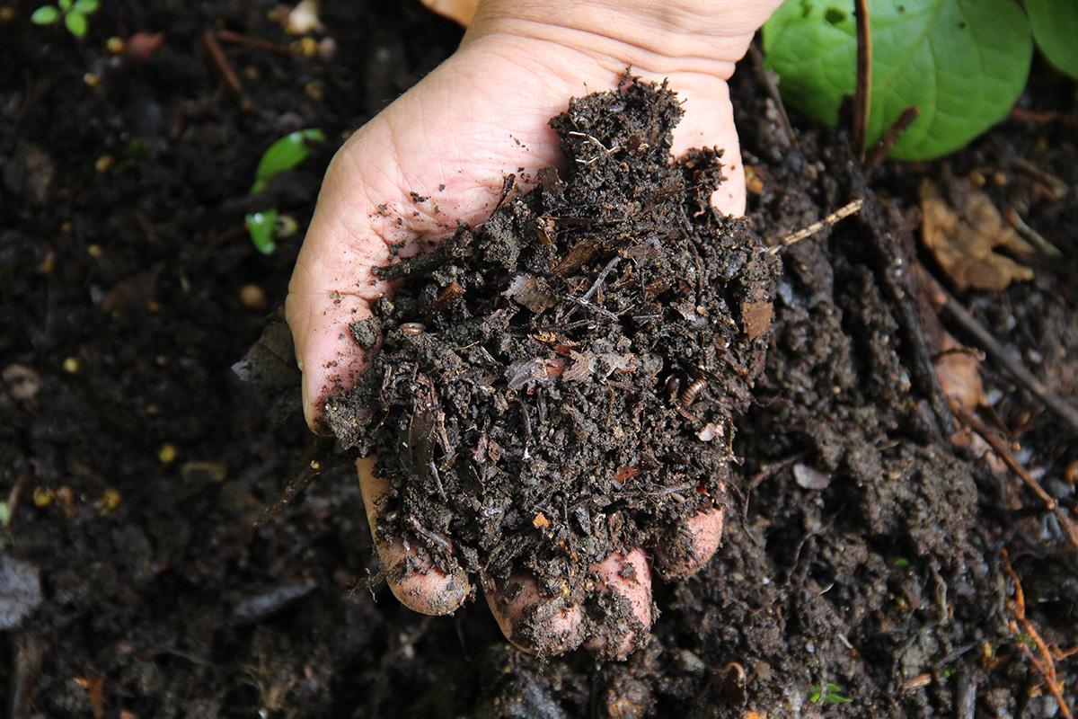 Con residuos org nicos recuperan suelo en poco tiempo for Como se creo el suelo
