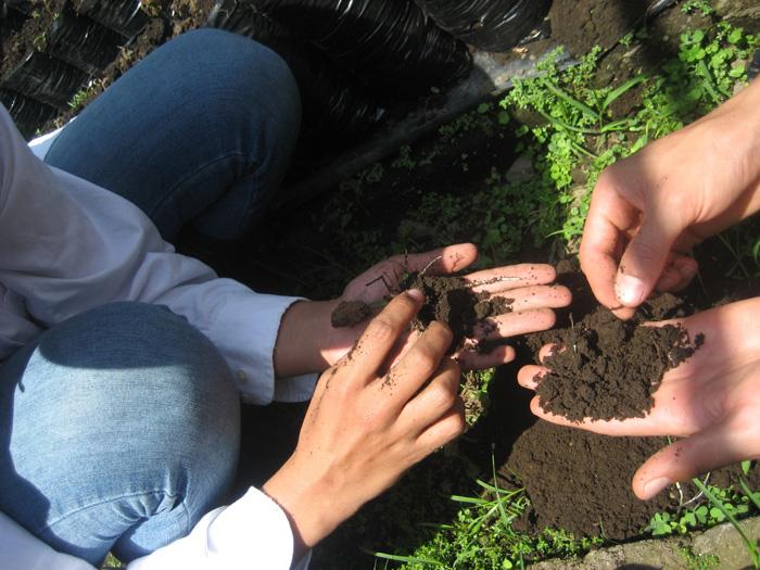 Agencia de noticias les devuelven la vida a suelos degradados for Informacion sobre el suelo